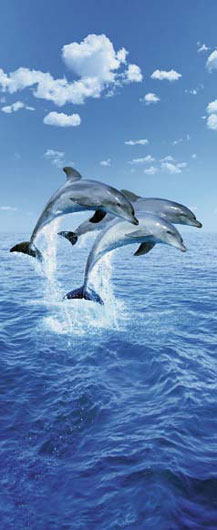 Photomural - Three Dolphins