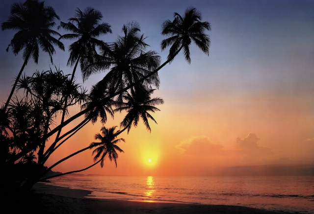 Photomural - Tropical sunset